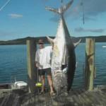 Pescan en Nueva Zelanda un atún de aleta azul del Pacífico de 335 kg